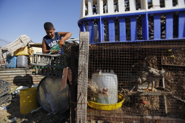 In this Tuesday, July 21, 2015, photo, a Palestinian boy pours water for birds in the village of Susiya, south of the West Bank city of Hebron. (Photo by Majdi Mohammed/AP Photo)