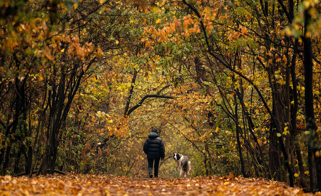 A woman walks with her dog in park during autumn day in Sofia, Bulgaria, 15 November 2019. The hot weather temperatures continue in the re​gion. Many parts of the country are still experiencing 22 Celsius degrees. (Photo by Vassil Donev/EPA/EFE)