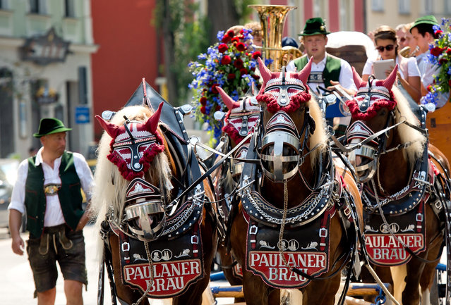The Paulaner brewery's yeast cultures are carried in a festive procession in Munich, Germany, August 14, 2015. The brewery's yeast cultures will be moved from the old inner-city site to the new, larger brewery. (Photo by Sven Hoppe/EPA)