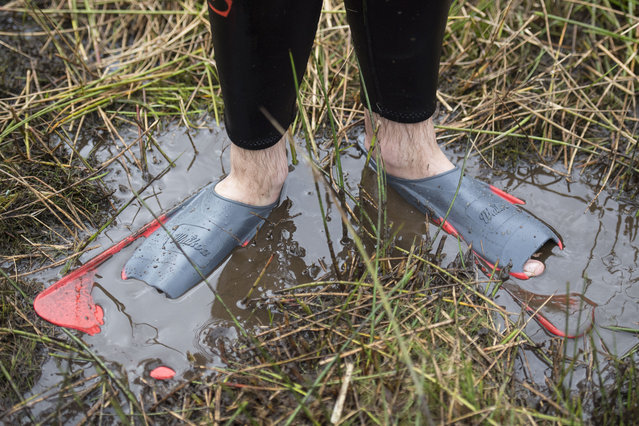 Flippers seen in the mud during the World Bog Snorkelling Championships 2017 on August 27, 2017 in Llanwrtyd Wells, Wales. (Photo by Matthew Horwood/Getty Images)