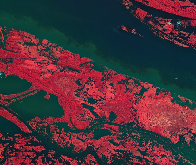 This is the Amazon River in the heart of northern Brazil's rainforest. Vegetation has been coloured with shades of pink – the darker the colour, the denser the vegetation. (Photo by The European Space Agency)