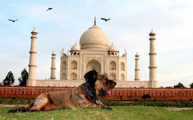 Oscar - The Traveller Dog