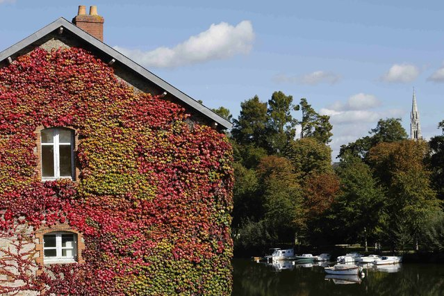 The Moulin Gautron center covered with Virginia creeper is seen on an autumn day in Vertou, near Nantes, France, October 8, 2015. (Photo by Stephane Mahe/Reuters)