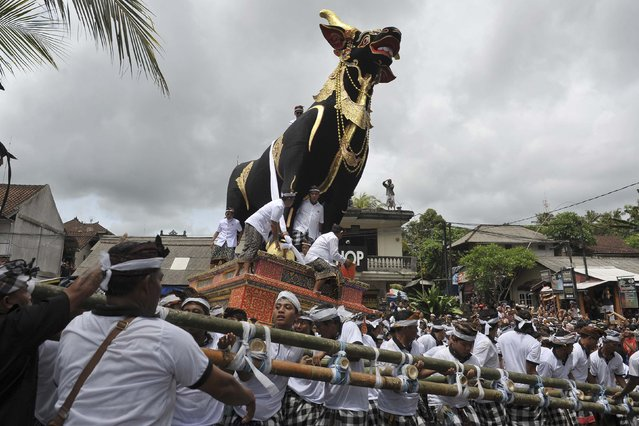 People carry the cattle coffin for the body of Tjokorda Raka Sukawati during cremation ceremony in Ubud, Bali resort island, December 9, 2014 in this photo taken by Antara Foto. (Photo by Nyoman Budiana/Reuters/Antara Foto)