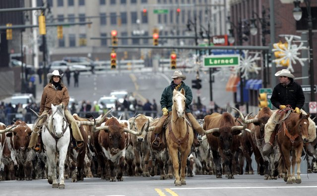 Horse-riding cowboys lead 120 longhorn cattle up Washington Blvd. to introduce the 2009 Dodge Ram pickup truck during press days of the 2008 North American International Auto Show in Detroit, Michigan in this file image from January 13, 2008. The Detroit show is held in January to be first among each year's major car shows. (Photo by Rebecca Cook/Reuters)