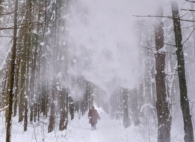 A woman walks along a forest path during a snowfall near the village of Lyubuchany outside Moscow on February 12, 2021. (Photo by Yuri Kadobnov/AFP Photo)