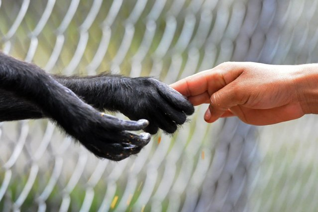 A child touches the hand of a monkey at the  Rossy Whalther's Zoo in Tegucigalpa, Honduras, on July 11, 2013. (Photo by Orlando Sierra/Reuters)
