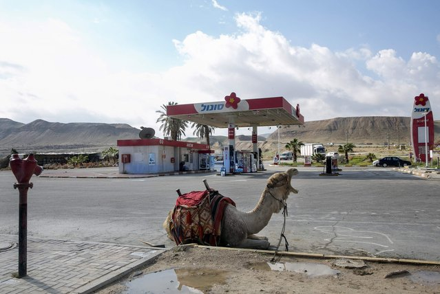 A camel rests at a fuel station in the Judean desert near the West Bank city of Jericho January 11, 2015. Reuters photographers from Mali to Mexico have shot a series of pictures of fuel stations. Whether it is plastic bottles by the roadside in Malaysia or a futuristic forecourt in Los Angeles, fuel stations help define our world. (Photo by Baz Ratner/Reuters)