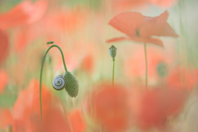 It's a Small World by Trui Heinhuis, Spain. (Photo by Trui Heinhuis/International Garden Photographer of the Year)