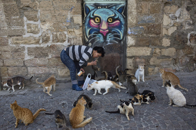 A woman feeds feral cats in central Jerusalem, Israel, 07 January 2016. (Photo by Abir Sultan/EPA)