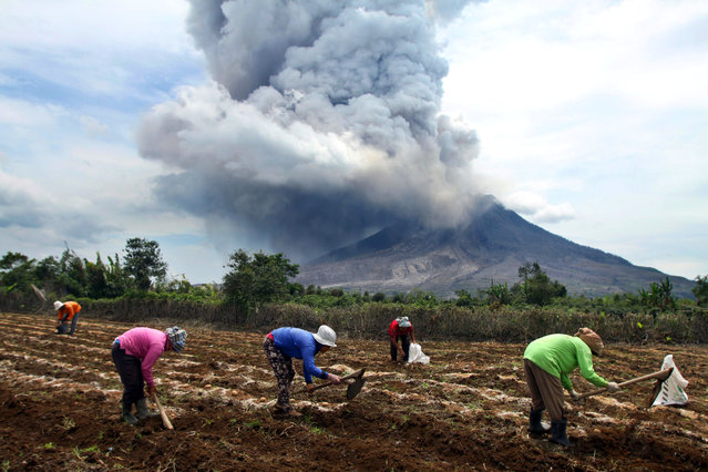 Indonesian villagers work in their field as mount Sinabung spews volcanic materials seen from Tiga Kicat village in Karo, North Sumatra, Indonesia, April 2, 2015. Indonesia's Mount Sinabung volcano continued sending hot gas and rock down its slopes and into the sky. The 2,460-metre volcano had been dormant for 400 years before it erupted in August 2010. (Photo by Dedi Sahputra/EPA)