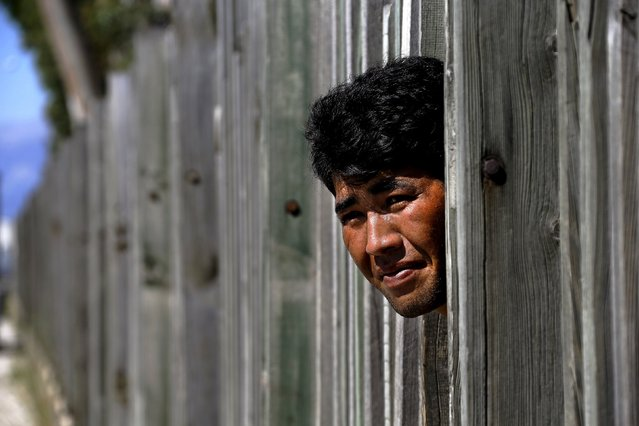 An Afghan immigrant looks through a wooden fence in a factory as he prepares to make a run towards the ferry terminal in the western Greek town of Patras May 4, 2015. (Photo by Yannis Behrakis/Reuters)