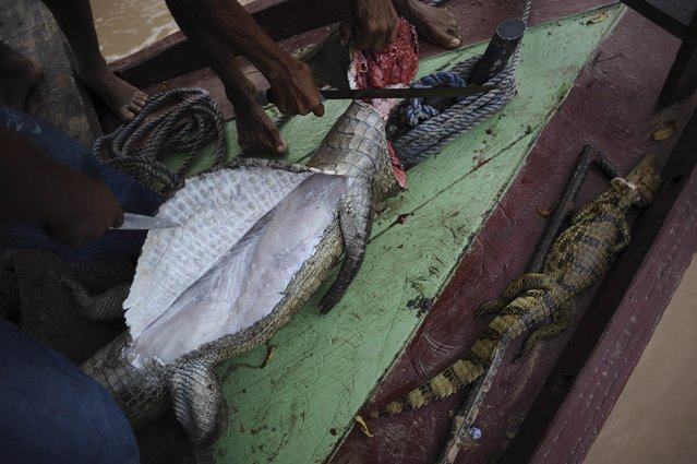 Madija Indians clean a caiman to eat, on a boat on the Envira river in Brazil's northwestern Acre state, March 14, 2014. (Photo by Lunae Parracho/Reuters)