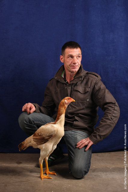 Mr Hobson, from Lancashire, holds his 8 month old Malay Pullet