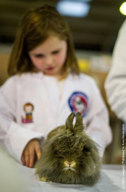 Animal Enthusiasts Enjoy The UK's Rabbit Grand National
