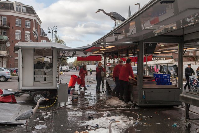 Over the years a large population of grey herons have made an unlikely home in urban Amsterdam. Julie Hrudova documents how the birds integrate into city life. Here: Grey herons have taken up residency in Amsterdam in recent decades, and are often seen at markets hoping to catch some fish or chicken. (Photo by by Julie Hrudova/The Guardian)