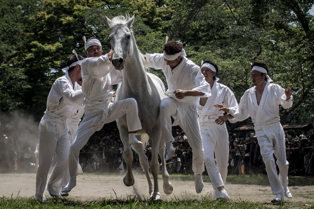 Okobito men try to catch a wild horse in the Nomakake ritual at the Soma Odaka Jinja Shrine during the Soma Nomaoi festival on July 27, 2015 in Minamisoma, Japan. Every summer the people of Fukushima prefecture have gathered to honor the ancient traditions of the Samurai at the Soma Nomaoi festival. The festival started as a military exercise more than 1000 years ago by Taira no Kojiro Masakado the founder of the Soma Clan. (Photo by Chris McGrath/Getty Images)