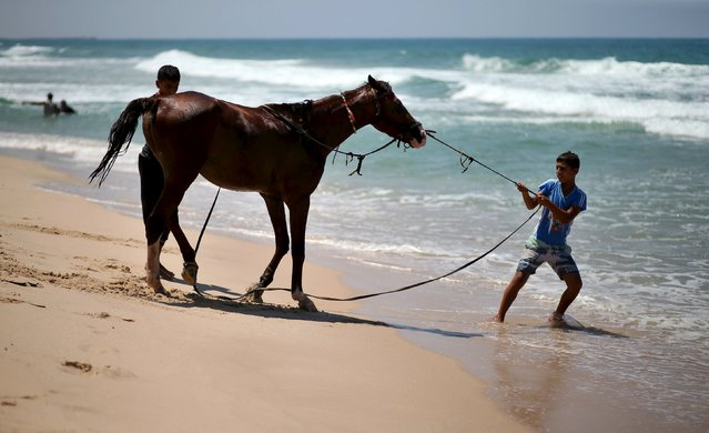 A Palestinian boy pulls a horse to wash it in the Mediterranean Sea off the coast of the northern Gaza Strip, August 13, 2015. (Photo by Mohammed Salem/Reuters)