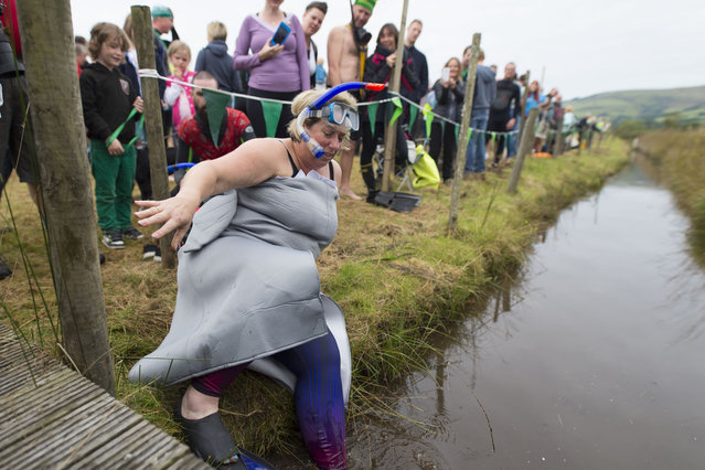 A woman enters the water during the World Bog Snorkelling Championships 2017 on August 27, 2017 in Llanwrtyd Wells, Wales. (Photo by Matthew Horwood/Getty Images)