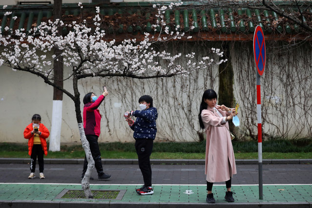 People wearing face masks use their phones under blooming cherry blossoms near Jiming Temple, as the country is hit by a novel coronavirus, in Nanjing, Jiangsu province, China on February 29, 2020. (Photo by Cnsphoto via Reuters)