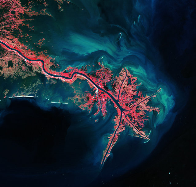 This is the Mississippi River Delta, where it empties into the Gulf of Mexico. Vegetation is coloured pink and sediment is bright blue and green. (Photo by The European Space Agency)