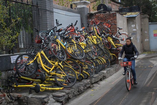 A woman rides a bicycle past shared bikes at a hutong in Beijing, China November 17, 2017. (Photo by Reuters/China Stringer Network)