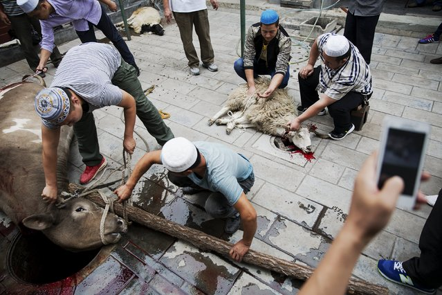 Muslims sacrifice animals at courtyard of the Dongsi mosque after morning prayers on Eid al-Adha in Beijing, China, September 24, 2015. (Photo by Damir Sagolj/Reuters)