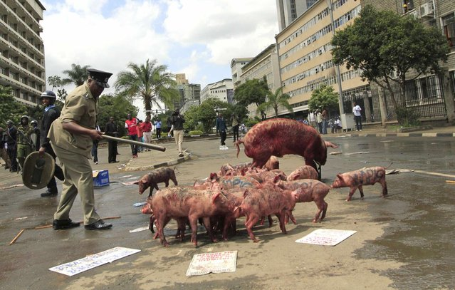 A policeman tries to control pigs left by protestors outside the parliament buildings during a demonstration against lawmakers' salary demands in the capital Nairobi, May 14, 2013. (Photo by Thomas Mukoya/Reuters)