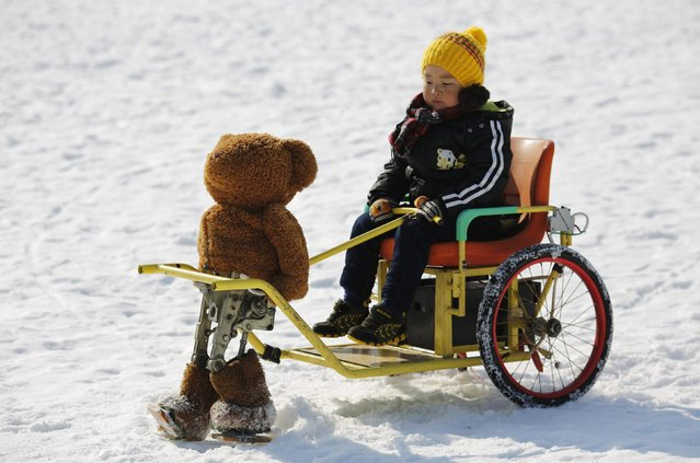 A boy rides on a snow wagon towed by a robot dressed as a Teddy bear, which only moves forward by moving its legs, during the Ice and snow carnival at Taoranting park in Beijing February 9, 2015. (Photo by Kim Kyung-Hoon/Reuters)