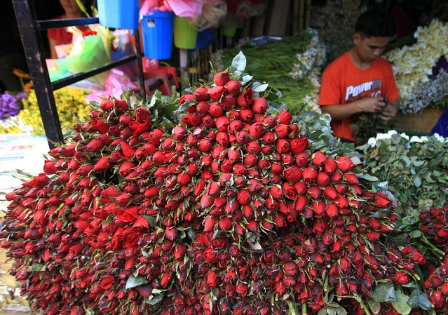A vendor removes thorns from roses before they are sold on the eve of Valentine's Day in Manila, February 13, 2015. (Photo by Romeo Ranoco/Reuters)