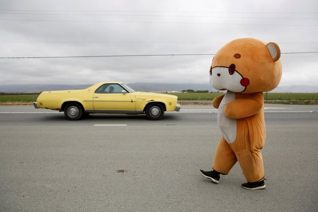 Jesse Larios, 33, from Los Angeles, wears a bear suit while walking along Hollister Road in Gilroy, California, U.S., April 21, 2021. Larios, also known as Bear Sun on social media, is walking from his home in Los Angeles to San Francisco while wearing the bear suit as a social media fundraising event. (Photo by Brittany Hosea-Small/Reuters)