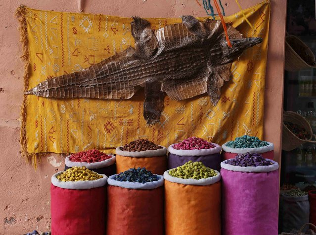 Crocodile skin is seen at a workshop in the old Medina of Marrakesh December 13, 2014. (Photo by Youssef Boudlal/Reuters)