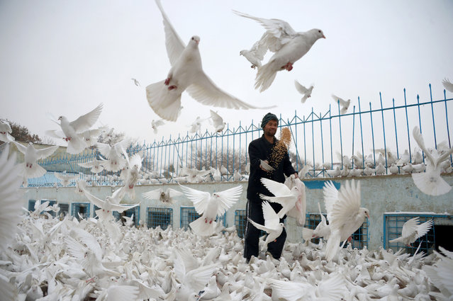 An Afghan man feeds pigeons in the courtyard of the the famous Blue Mosque in Mazar-i-sharif on Nov 24, 2016. (Photo by Farshad Usyan/AFP Photo)