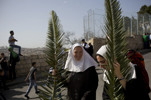 Christian nuns hold palm fronds during the traditional Palm Sunday procession on the Mount of Olives overlooking Jerusalem's old city, Sunday, March 29, 2015. (Photo by Oded Balilty/AP Photo)