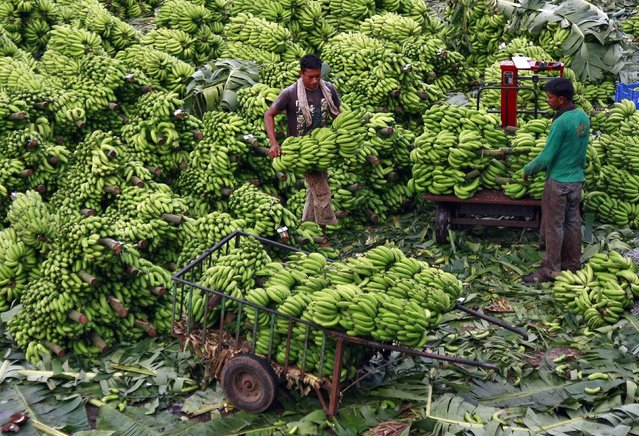 A workers carries bananas to load them into a cart after weighing them at a wholesale market in the southern Indian city of Kochi November 28, 2013. (Photo by Sivaram V/Reuters)