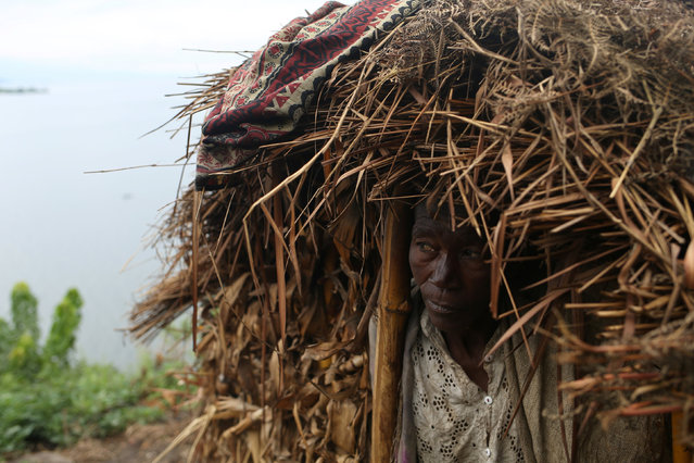Habimana, 45, stands in front of her house, at Kagorwa Pygmy camp on Idjwi island in the Democratic Republic of Congo, November 25, 2016. Habimana has lived alone with her four daughters since her husband died of malaria in 2014. On Idjwi, the largest island in Democratic Republic of Congo, a way of life is dying. The Bambuti, one of several Pygmy groups in Congo, are among central Africa's oldest indigenous peoples. For millennia, they have lived as hunter-gatherers, surviving off the forest's bounty of plants, birds and monkeys. Idjwi, in the middle of Lake Kivu, has been spared the ravages of wars in eastern Congo that have killed millions of people since 1996, mostly from hunger and disease. But for its indigenous inhabitants, the advance of another culture has proved nearly as devastating. The Bambutis, like  Pygmy groups across central Africa, have been pushed out of a native land to which they could assert no legal title – in this case, to make way for an exploding ethnic Bantu population who now make up more than 95 percent of Idjwi's 280,000 inhabitants. Around 1980, the Bambuti say, local authorities and customary chiefs from the Bahavu, a Bantu people, expelled them from the forests and turned the land over to Bahavu to farm and build houses. The Bambuti lost their livelihood and, with few if any assets, no education, and no experience of how to support themselves in an alien environment, their society has withered. (Photo by Therese Di Campo/Reuters)