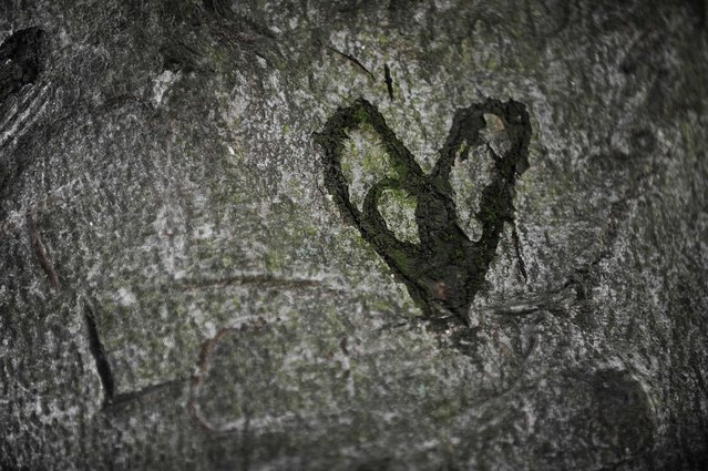 A heart is carved into the bark of a tree in a park Berlin. (Photo by Barbara Sax/AFP/Getty Images)