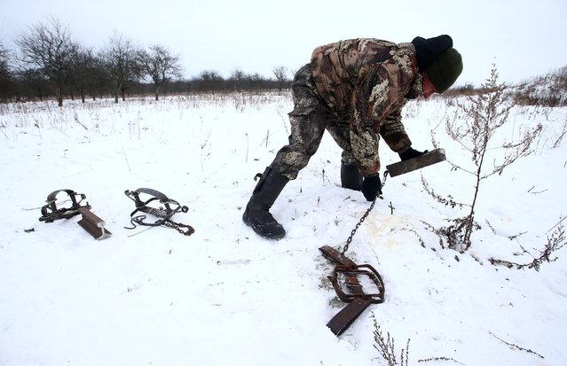 Vladimir Krivenchik, a hunter, installs traps in a field to catch a wolf near the village of Khrapkovo, Belarus February 1, 2017. (Photo by Vasily Fedosenko/Reuters)