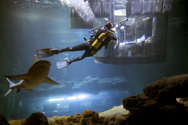 A diver takes pictures as people look at sharks from an underwater room structure installed in the Aquarium of Paris, France, March 14, 2016. (Photo by Charles Platiau/Reuters)