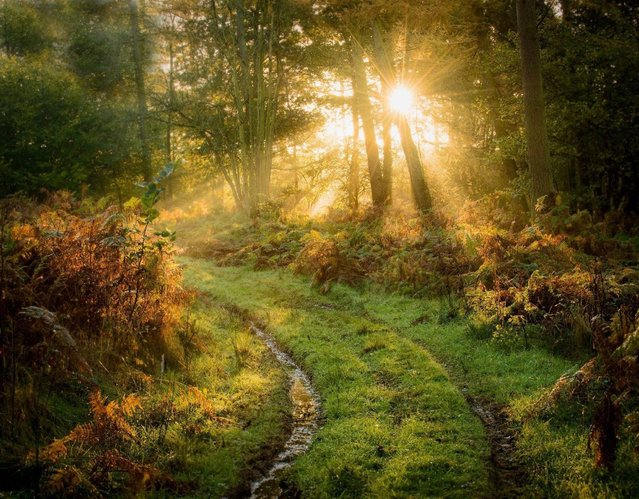"""""""Early Light""""; Newlands Wood, Cannock, UK. (Photo by Graham Colling/PA Wire)"""