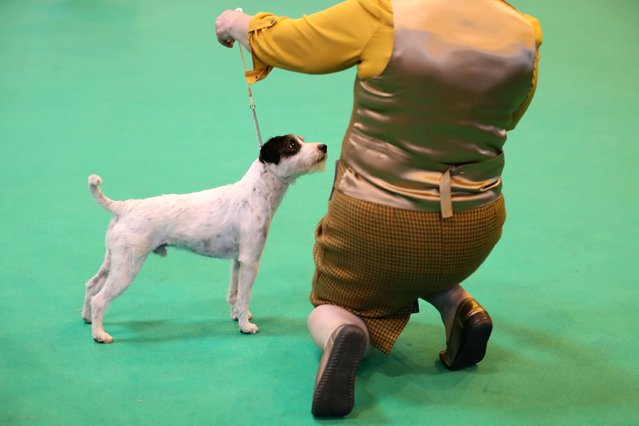Dogs and owners arrive for the first day of Crufts Dog Show at NEC Arena on March 09, 2017 in Birmingham, England. (Photo by Matt Cardy/Getty Images)
