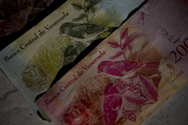 This October 20, 2018 photo shows Bolivar bank notes decorated with images of Venezuela's red siskin bird, as part of rescue program in Caracas, Venezuela. Images of a tiny red bird that barely fills the palm of one's hand appear everywhere in Venezuela – printed on money, labels of craft beer bottles and the cover of children's school books. (Photo by ernando Llano/AP Photo)