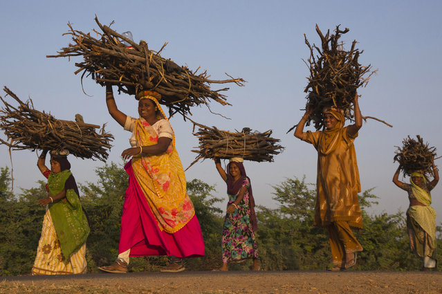 """""""Women in Gujarat"""". In some remote places in India as near Mandvi in Gujarat, women have to go and search for firewood for cooking. Photo location: Mandvi, Gujarat State, India. (Photo and caption by Bertrand Linet/National Geographic Photo Contest)"""