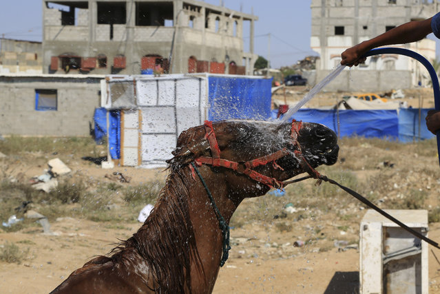 Mohammed al-Masri cools off his family horse near the ruins their house, which was destroyed in the last summer's Israel-Hamas war, in Beit Hanoun, in the northern Gaza Strip, Thursday, July 30, 2015, where the high temperature was 36 degrees Celsius (97F). (Photo by Adel Hana/AP Photo)