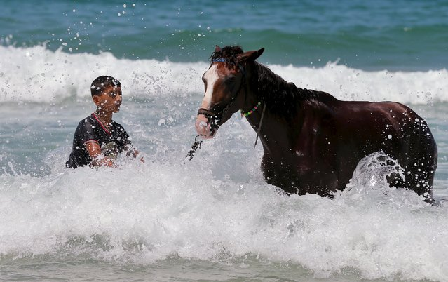 A Palestinian boy washes a horse in the Mediterranean Sea off the coast of the northern Gaza Strip, August 13, 2015. (Photo by Mohammed Salem/Reuters)