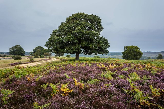 New Forest. Twist and turn through vibrant gorse, imposing woodland and bubbling streams, and stroll through the forest's 143 miles of trails which wind their way through 193,000 acres of unspoilt heath and ancient woodland. (Photo by Mark Simpson)