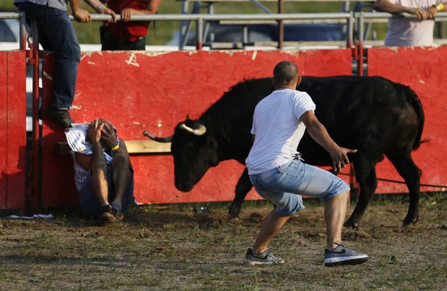 """A matador tries to distract an attacking bull after Bolino Silveira (L), who emigrated from the Azores to Mississauga, Ontario, tries to protect his head after falling at an Azorean """"tourada a corda"""" (bullfight by rope) in Brampton, Ontario August 15, 2015. (Photo by Chris Helgren/Reuters)"""
