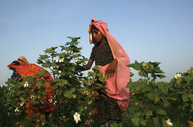 A girl plucks cotton blooms from a field on the outskirts of Faisalabad, Pakistan, August 27, 2015. (Photo by Fayyaz Hussain/Reuters)