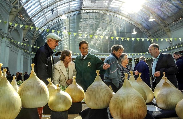 People look at onions on display at the RHS London Harvest Festival Show, on October 7, 2014. Growers from across the UK come together for the show to exhibit their bounty in the annual fruit and vegetable competition. (Photo by Dan Kitwood/Getty Images)