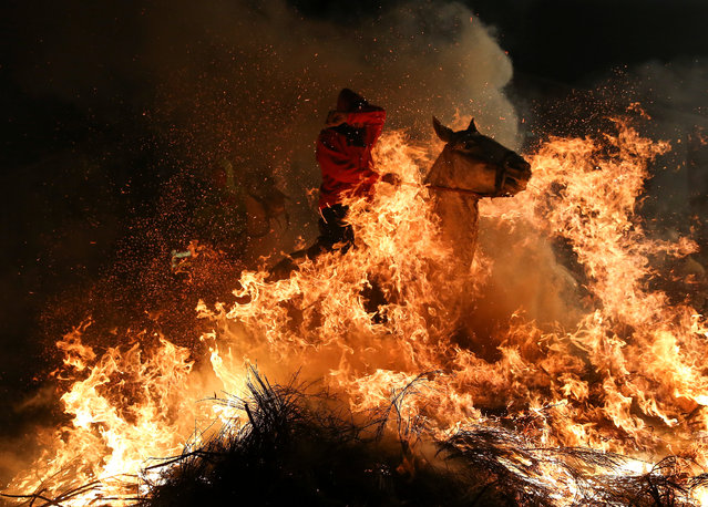 "A man rides a horse through flames during the annual ""Luminarias"" celebration on the eve of Saint Anthony's day, Spain's patron saint of animals, in the village of San Bartolome de Pinares, northwest of Madrid, Spain, January 16, 2017. (Photo by Paul Hanna/Reuters)"